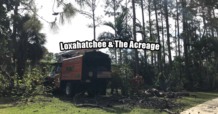 Tree Trimming in Loxahatchee & The Acreage