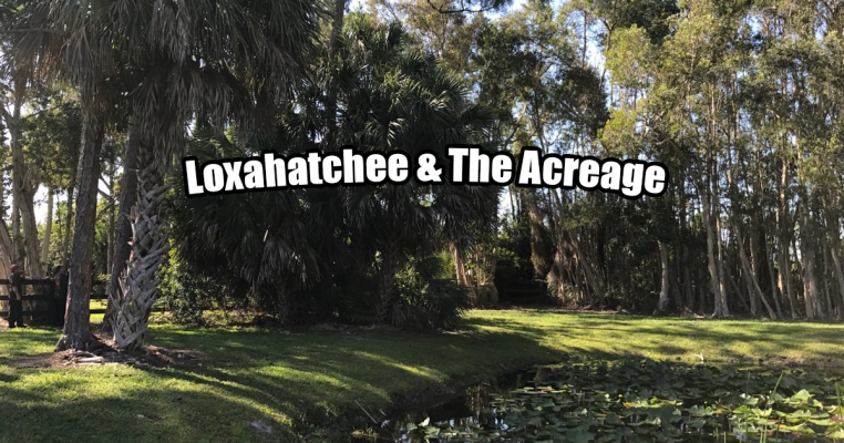 Tree Removal in Loxahatchee & The Acreage