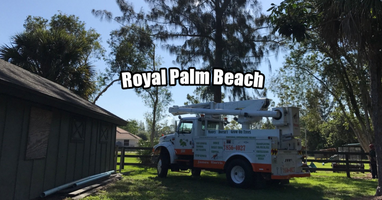 Tree Removal in Royal Palm Beach