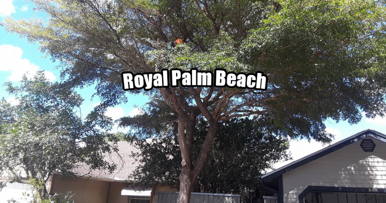 Tree Trimming in Royal Palm Beach