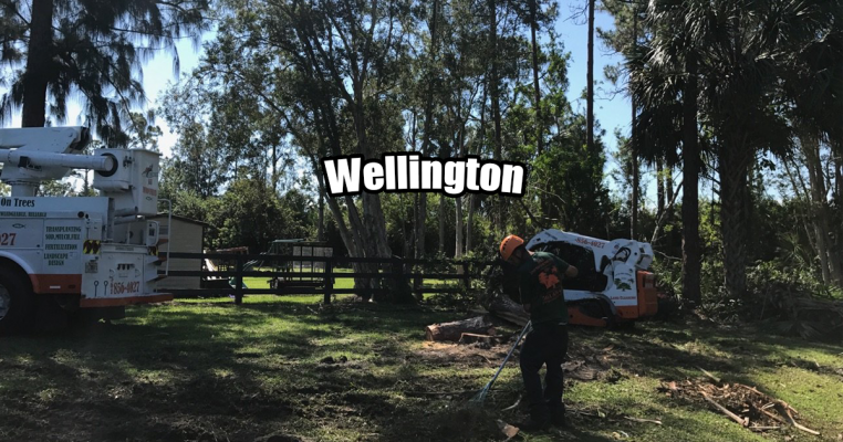 Tree Removal in Wellington