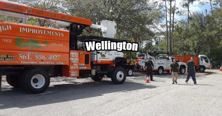 Tree Trimming in Wellington